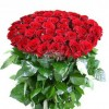 Bunch of 50 Red Roses